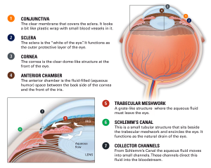 Canaloplasty for Glaucoma - Eye Anatomy PNG
