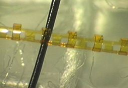150x magnification of SCE and size comparison to a human hair